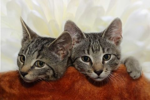 Aaa, kotki dwa – piosenka kołysanka – tekst piosenki
